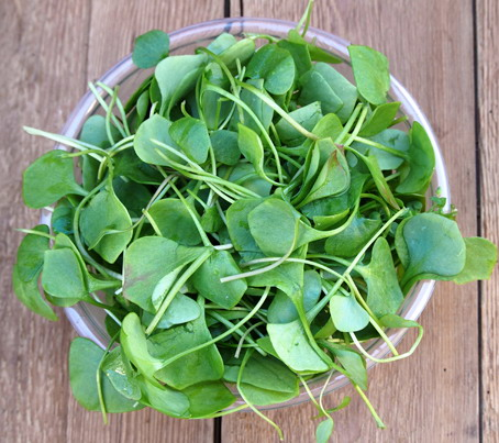 Fresh watercress ready for salad preparation
