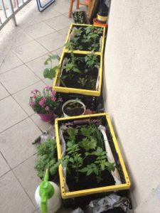 koszyki balkon1